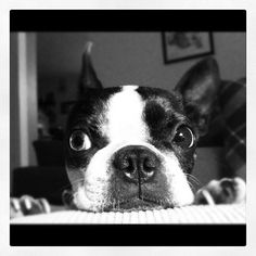 Lola!!