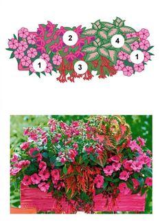 Nordbalkon - Blumenkasten mit Edellieschen, Fuchsien und Buntnesseln