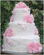 Print Your Own Wedding Invites Table Plans & Speeches Toasts + Make Cakes 2 CDs