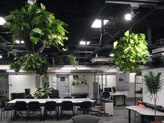 اشتباهات رایج در کاشت گیاهان در فضاهای داخلی