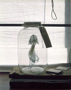 Sea Life : Lauri Faggioni