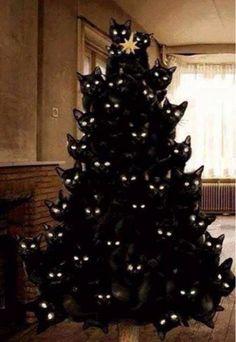 A cat Christmas!!