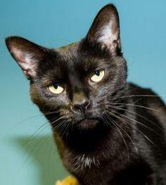 PETA Shames Medina Co for No Longer Killing Cats