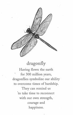 Dragonfly totem: You are strong and can overcome times of hardship. You will transform and emerge stronger than before