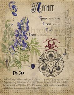 Book of Shadows Printable pages of Poisonous Plants Witchcraft Herbal Grimoire BOS Sheets Spell Ingredient Green Witch Herbarium 8 BOS Magic Herbs, Herbal Magic, Witch Herbs, Poisonous Plants, Modern Witch, Book Of Shadows, Occult, Wiccan, Teen Wolf