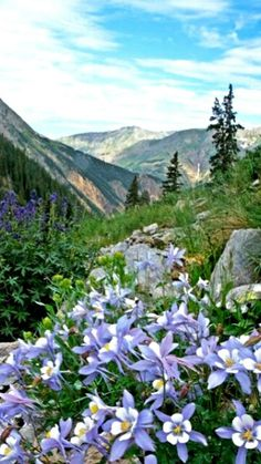 Stoney Pass-photo by Mike Barton ,look at all that Columbine! Beautiful World, Beautiful Places, Beautiful Pictures, Mother Earth, Mother Nature, Pass Photo, Colorado Mountains, Nature Pictures, Amazing Nature