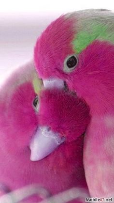 Pink Love Birds... reminds me of @Megan Rogers Cook  :)  cute!  love these little birdies
