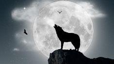 Lobo aullando a la luna llena - 1920x1080