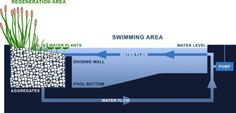 Natural swimming pond zone diagram | Minimum pool size recommendations range from 30 to 50 square meters, but we have also seen much smaller pools that function quite well.  Depending on design, swimming zones typically comprise 50 to 70% of the total water surface area; the rest is dedicated to filtration. Water is pumped to shallow areas with abundant plant life and aggregate that act as natural filters, keeping water pure and clear. In order for plants to thrive, pH levels should be…