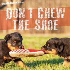 What's your dog's favorite shoe alternative? Bully sticks, cow ears, bones...