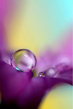 Water Droplets Macro with purple aqua blue and yellow Gota A Gota, Drip Drop, Fotografia Macro, Dew Drops, Rain Drops, Water Droplets, All Nature, Jolie Photo, All Things Purple