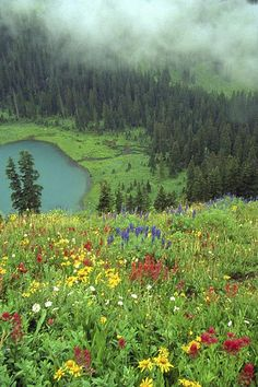 when i lived in colorado, i'd ride my horse into the mountains and see double rainbows and then below me, a carpet of wildflowers like nothing i'd ever seen before. it was really beautiful there.
