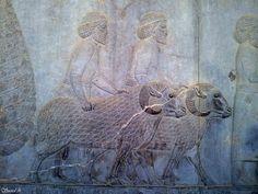 Basorelief din Palatul Apadana, Persepolis, Iran, datând din secolele VI-V î.e.n. Iran, Painting, Painting Art, Paintings, Painted Canvas, Drawings