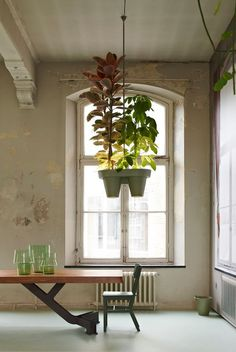 Botanic Bucket Light by Roderick Vos