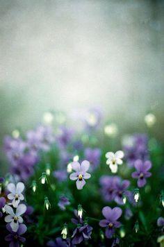 ♔ romantic, soft, delicate, nostalgic, ethereal