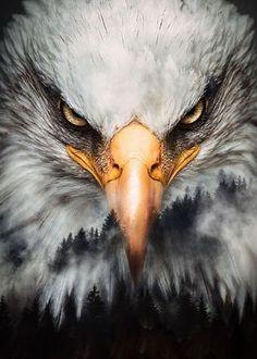 Bald Eagle Tattoos, Eagle Head Tattoo, Eagle Artwork, Aigle Animal, Kopf Tattoo, Eagle Images, Bald Eagle Pictures, Eagle Wallpaper, Iphone Wallpaper