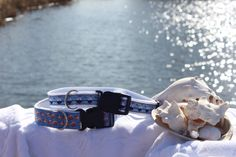 sailboats and sea shells dog collars