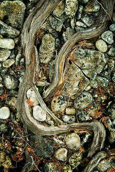 Roots and Rocks Bruce - Peninsula National Park, Canada © Mark Graf Photography