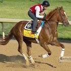 How did this year's Kentucky Derby horses get their names? Find out here