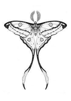 Comet moth tattoo ideas Comet moth on Behance Luna Moth Tattoo, Kritzelei Tattoo, Tatoo Art, Tattoo Drawings, Sternum Tattoo, Tattoo Flash Art, Samoan Tattoo, Polynesian Tattoos, Grey Tattoo