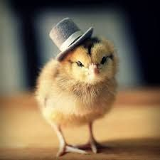 Baby chick in a top hat!