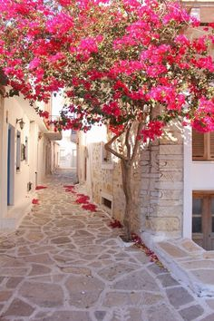 Bougainvillier, Naxos Island, Greece We are want to say thanks if you like to sh. Beautiful World, Beautiful Gardens, Beautiful Flowers, Beautiful Pictures, Wonderful Places, Beautiful Places, Illustration Blume, Flower Aesthetic, Belle Photo