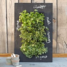 For easy labeling - Chalkboard Wall Planter | Williams-Sonoma
