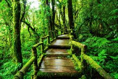 The Ang Ka nature trail in the Doi Inthanon National Park