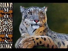 ▶ Wildlife Art - painting fur * EXTENDED PREVIEW *- Jason Morgan - YouTube