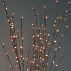 Willow Branch Light - Medium by The Light Garden
