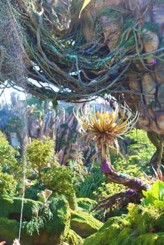 Pandora – The World of Avatar opened at Disney's Animal Kingdom while we were visiting last week and it was amazing! In this incredibly themed land, eco-tourists join Alpha Centauri Ex… Disney Tips, Disney Vacations, Animal Kingdom, Avatar, Pandora, World, Amazing, Dining, Pictures