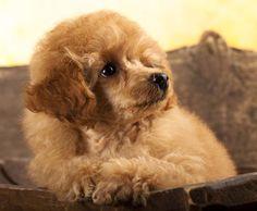 Przysmaki dla psa alergika:  http://www.kakadu.pl/Przysmaki-i-suplementy-dla-psow/przysmaki-dla-psa-alergika.html