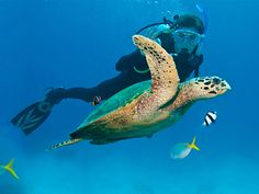 #Travel Best Diving Sites in the World