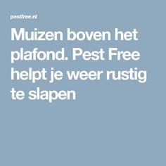 Muizen boven het plafond. Pest Free helpt je weer rustig te slapen