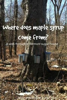 Where Does Maple Syrup Come From? Learn where in this walk through a #Vermont sugarhouse http://www.confessionsofanover-workedmom.com/2014/03/maple-syrup-come.html