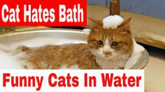 Cats Hates To Bath - Funny Cats In Water Compilation