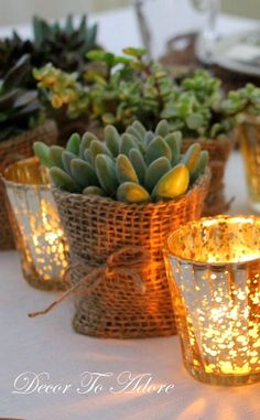 Burlap wrapped succulents~ Decor To Adore.