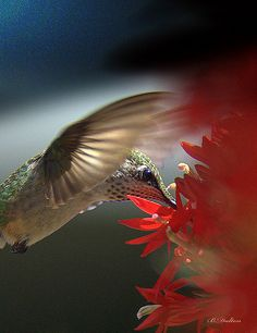 Legends say that hummingbirds float free of time, carrying our hopes for love, joy and celebration.