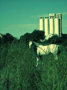 unicornios en el pueblo