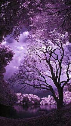 Mother Nature is the best artist. Simply beautiful- I'm in purple heaven~ Purple Sky, Purple Love, All Things Purple, Shades Of Purple, Purple Trees, Purple Stuff, Plum Purple, Magenta, Lilac
