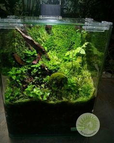 206 best aquarium images in 2019 fish tanks aquarium aquarium design rh pinterest com