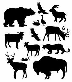 North American Animals