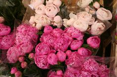 sts: i'd rather have peonies on my table ...