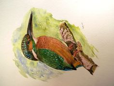 Original Watercolor Paint - Kingfisher (Print Available) by PinarBelendir on Etsy