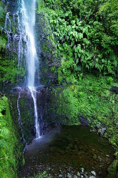 Waterfall at levada of Caldeirão Verde. #madeira #secretmadeira