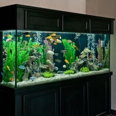 265 Gallon African Cichlid Aquarium | PetSolutions