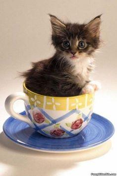 Spot Of Team Kitten - funnykittensite.com
