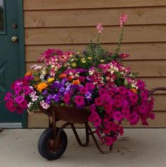 Has anyone successfully planted a flower garden in a wheel barrow like this before? It must be very difficult to get right especially drainage. This is one of the prettiest I have seen. #gardening #garden #DIY #home #flowers #roses #nature #landscaping #horticulture