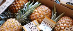 Pineapple tour and distillery Maui