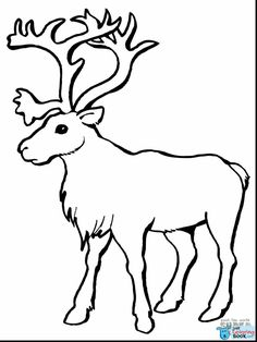 Caribou Coloring Pages For Toddlers : Here are ten caribou coloring pages that will develop your kid's interest, not just in Caribous, but all the wild animals. Caribou Coloring Pages Fo Rudolph Coloring Pages, Deer Coloring Pages, Mothers Day Coloring Pages, Puppy Coloring Pages, Elephant Coloring Page, Dinosaur Coloring Pages, Cartoon Coloring Pages, Disney Coloring Pages, Adult Coloring Pages